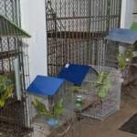 Cetas recebe mais de 300 aves de operação realizada na Chapada